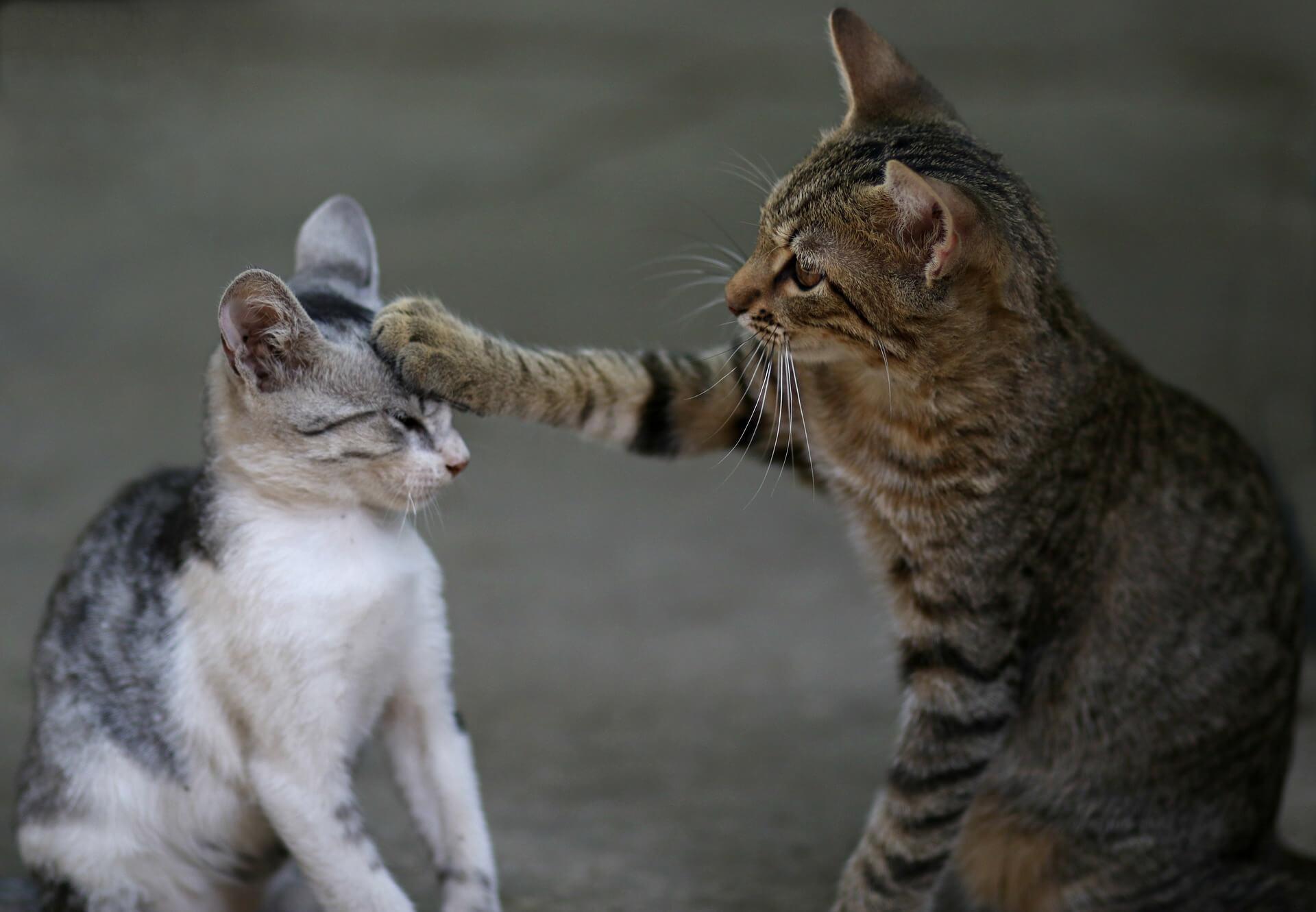 猫の喧嘩で頭に猫パンチをしているところ