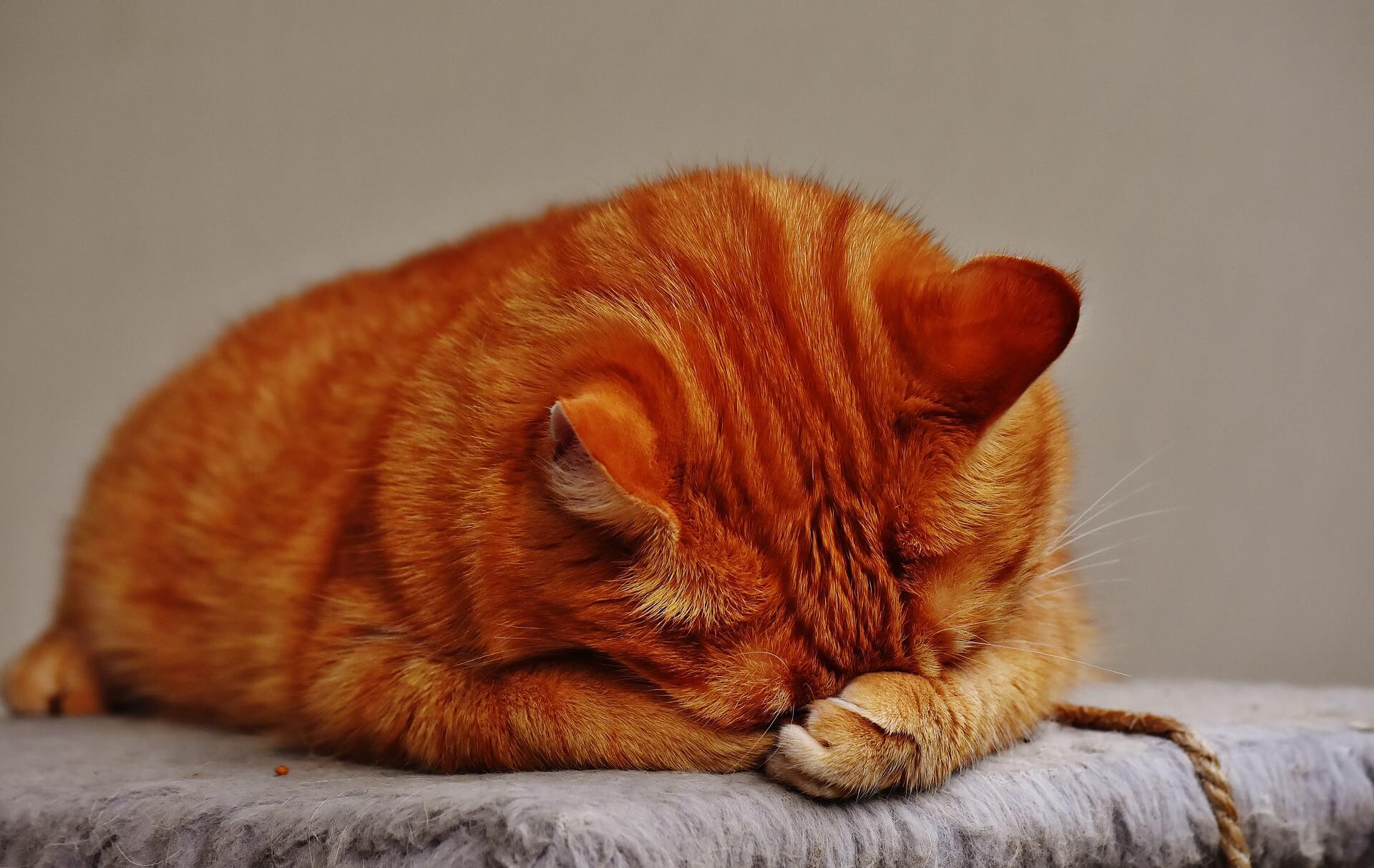 ふさぎこむ猫