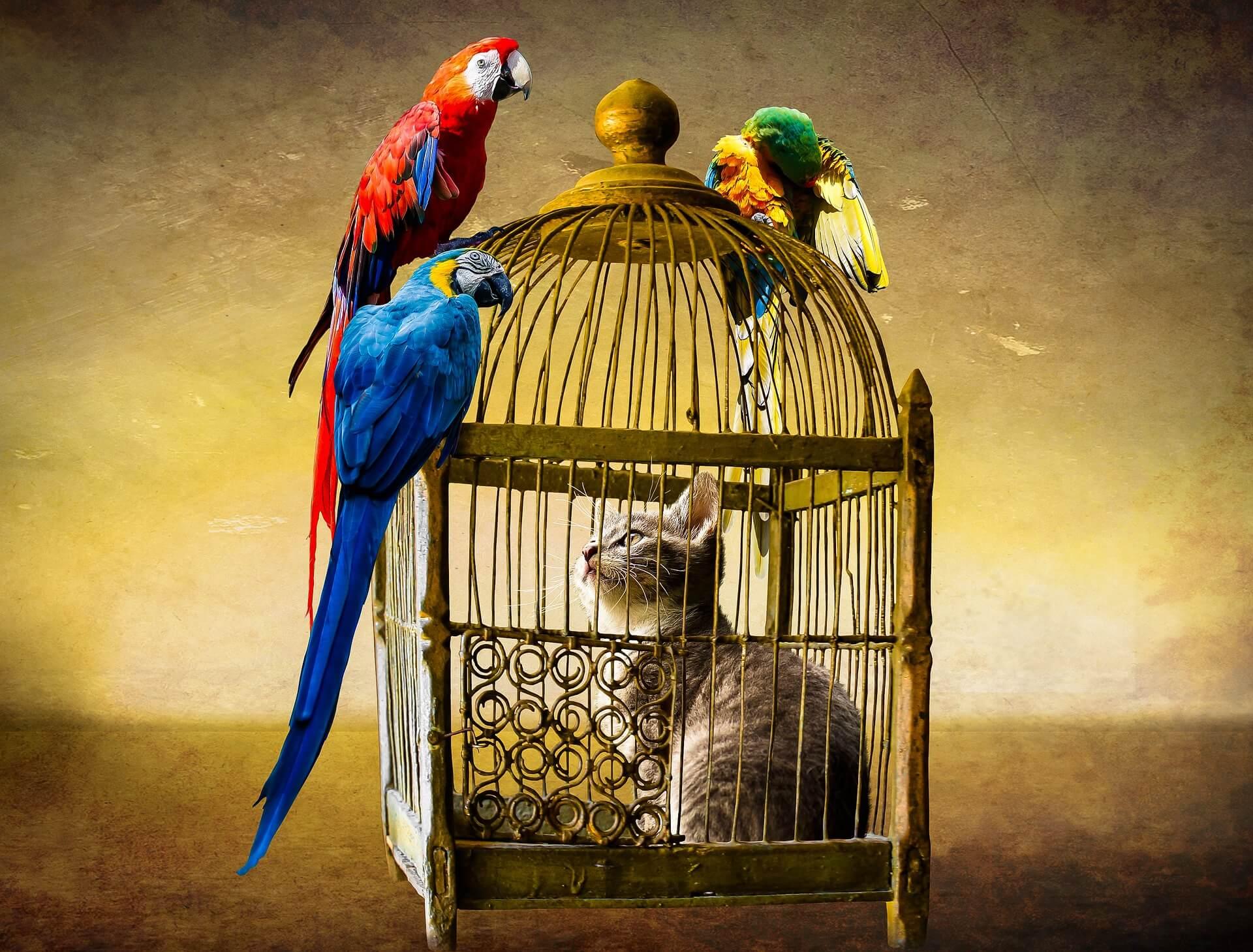 籠の中の猫が外の青い鳥をみている