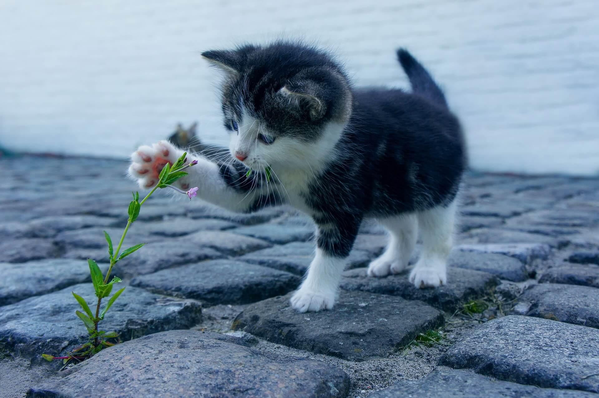 草でじゃれる子猫